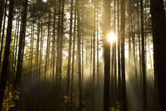 солнце тумана Стоковая Фотография