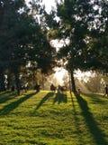 Солнце установило в парк стоковое изображение rf