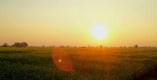 Солнце установило урожаи на западе красивый стоковые фотографии rf