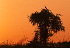 солнце установленное птицами Стоковые Изображения