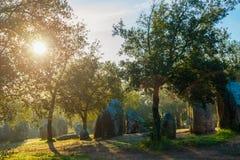 Солнце утра приходя через листья дерева стоковое фото
