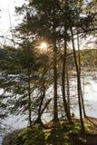 Солнце утра разрывая через рощу деревьев рядом с бобром p Стоковые Изображения RF