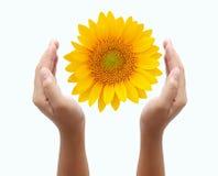 солнце удерживания руки цветка Стоковая Фотография
