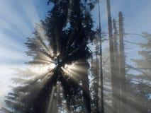 солнце фасолей frorest туманное Стоковое Изображение