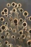 солнце цветков Стоковые Изображения RF