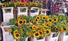 солнце цветков Стоковая Фотография RF