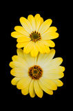 солнце цветков Стоковое Фото
