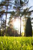Солнце через деревья освещает траву Стоковая Фотография RF