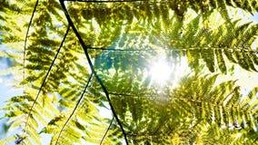 Солнце через папоротник Стоковые Изображения