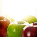 солнце яблок Стоковая Фотография