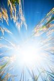 солнце яркой травы высокое стоковые изображения