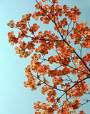 солнце dogwoods светлое Стоковые Фотографии RF