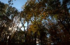 Солнце Peeking через цвета падения стоковое изображение