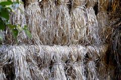 Солнц-высушенные растительные волокна в Lijiang, Юньнань, Китае стоковое фото rf