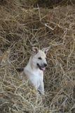 Солома для щенка собаки стоковое фото