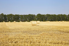 Солома на фото полей Стоковые Фотографии RF
