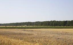 Солома на фото полей Стоковое Изображение RF
