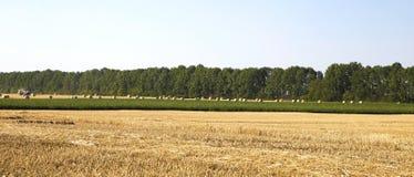 Солома на фото полей Стоковые Изображения RF