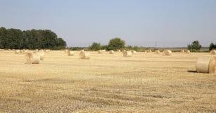 Солома на фото полей Стоковое Изображение