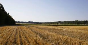 Солома на фото полей Стоковая Фотография