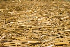 Солома пшеницы Текстурированная абстрактная предпосылка для дизайна Стоковое Изображение RF