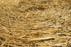 Солома пшеницы Текстурированная абстрактная предпосылка для дизайна Стоковые Фото