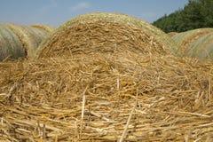 Солома пшеницы Текстурированная абстрактная предпосылка для дизайна Стоковое Фото