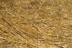 Солома пшеницы Текстурированная абстрактная предпосылка для дизайна Стоковая Фотография