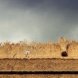 Соломенная крыша с соломой, тростником и инструментами Стоковые Изображения RF