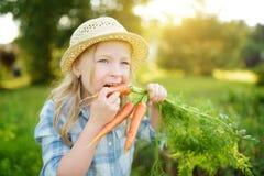 Соломенная шляпа милой маленькой девочки нося держа пук свежих органических морковей Свежие здоровые натуральные продукты для мал стоковые фотографии rf