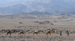 соль каравана эфиопское Стоковые Фотографии RF