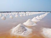 соль лотка Стоковые Фото