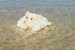 соль озера baskunchak стоковое фото