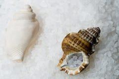 соль солит раковину моря стоковые изображения rf