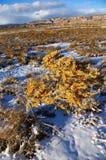 соль щетки Стоковое Изображение RF