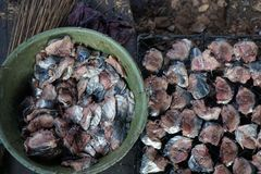 Сом моря вид сома моря известный как manyung в Индонезии и arahan в Филиппинах Рыба была сохраненными wi Стоковые Изображения RF