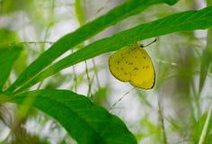 Сонная оранжевая бабочка пряча на зеленых лист стоковое изображение rf