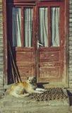 Сонная собака предохранителя шавки стоковые изображения rf