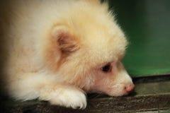 Сонная собака стоковая фотография