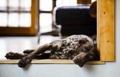Сонная собака Стоковые Фото