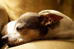 Сонная собака стоковое фото