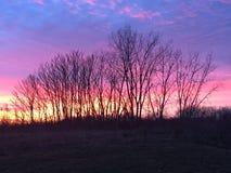 Сонные деревья Стоковое Изображение