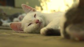 Сонный котенок лежа outdoors видеоматериал