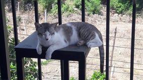 сонный кот получает бодрствующим стоковые изображения rf