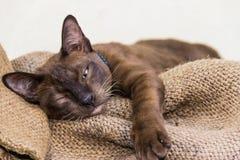 Сонный кот стоковое изображение rf