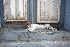 Сонный кот Стоковое фото RF