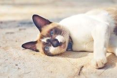 Сонный кот Стоковая Фотография