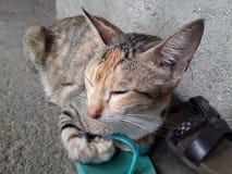 Сонный кот стоковые изображения