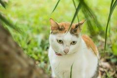 Сонный кот Стоковые Изображения RF