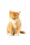 Сонный сидя котенок Стоковая Фотография RF